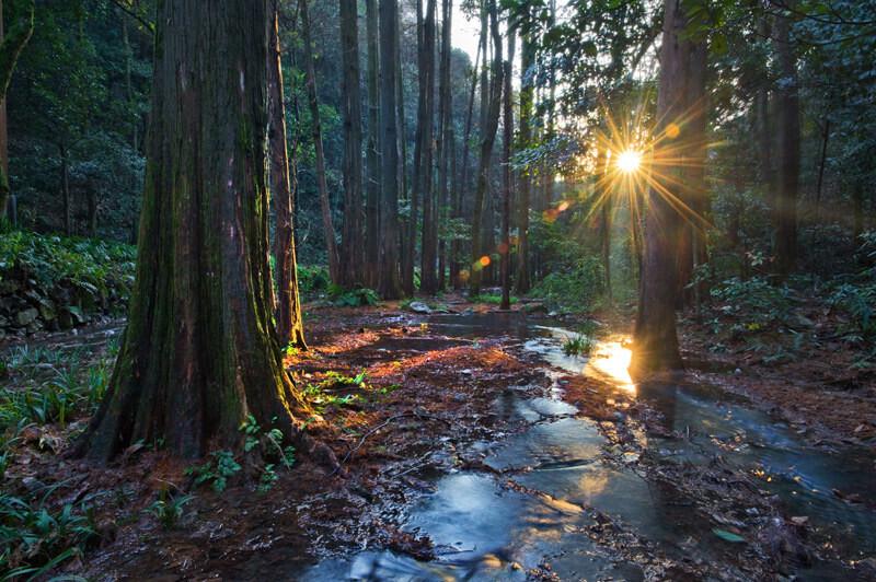 4月影赛建筑风景篇一等奖<br /> 融雪溪中溪 周书锋(杭州)拍摄于杭州九溪。傍晚的阳光透过水杉的缝隙,为树干镶了一道细细的金边。阳光从流水中反射,在淡蓝色的包围中有一抹耀眼的暖色。