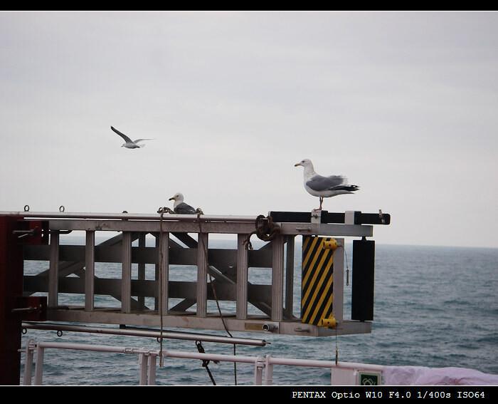 """海鸥与舷梯<br /> """"VALE DONGJIAKOU""""试航随拍"""