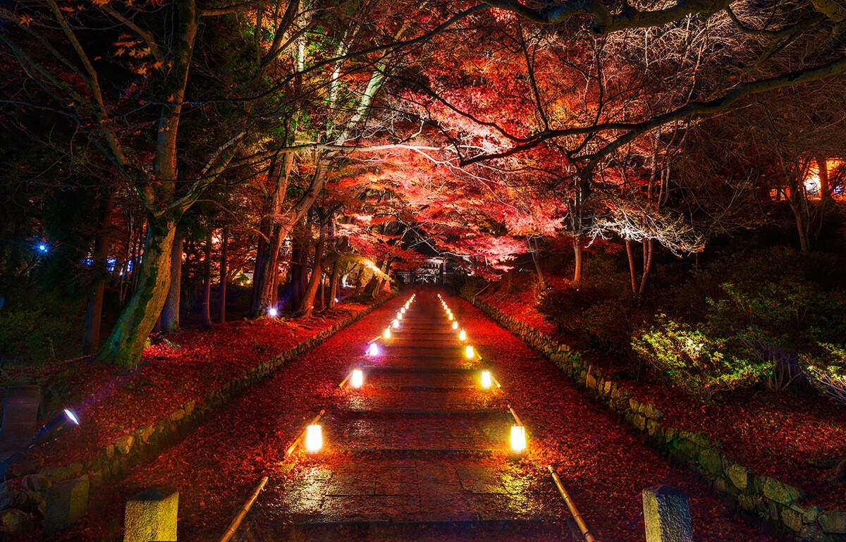 京都山区的毘沙門堂,晚秋的冷雨打落一地枫叶、