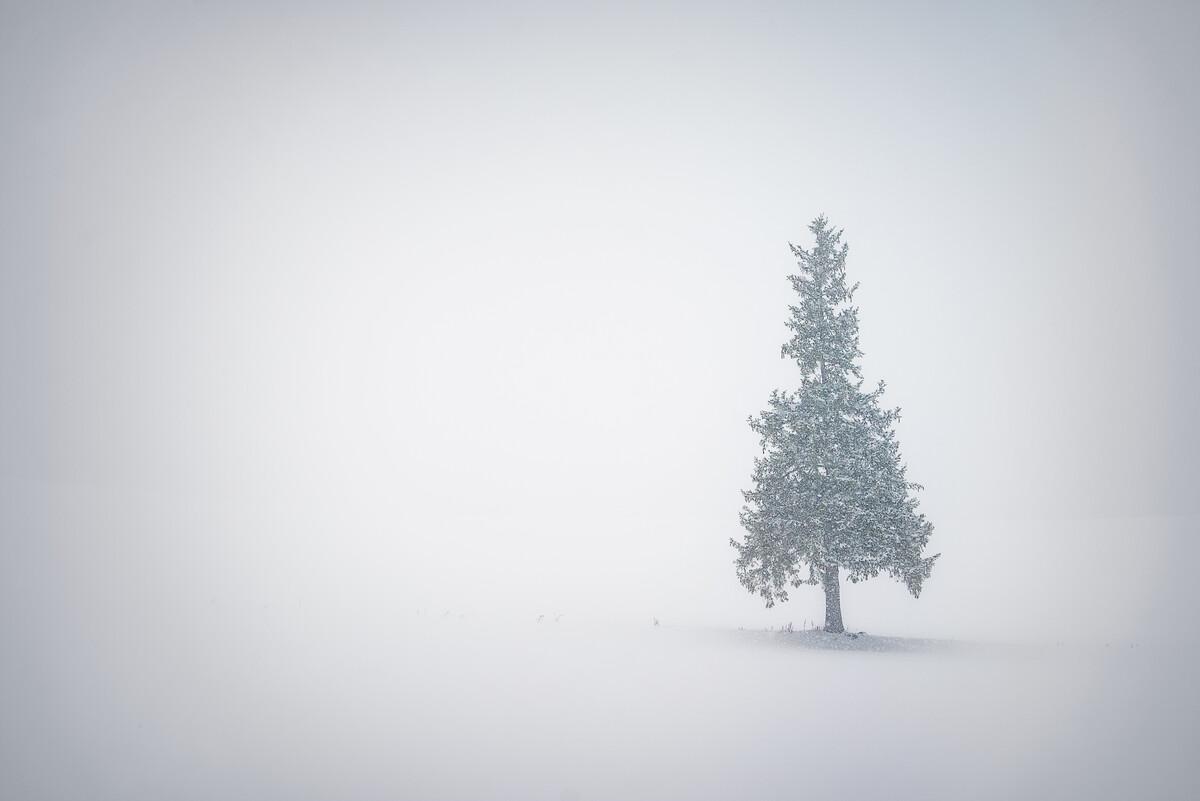 """这棵树官方名字就是 """"クリスマスツリーの木"""" (Christmas Tree之树,囧),在Google地图上就可以查到这棵北海道美瑛旷野上的孤树。我们在鹅毛大雪中终于在路边找到这棵著名的树时,风景的一切线条和纹理已经消失在雪中,仿佛天地间只有我们与这棵圣诞树了,难得地选择拍了一张极简。圣诞快乐~"""