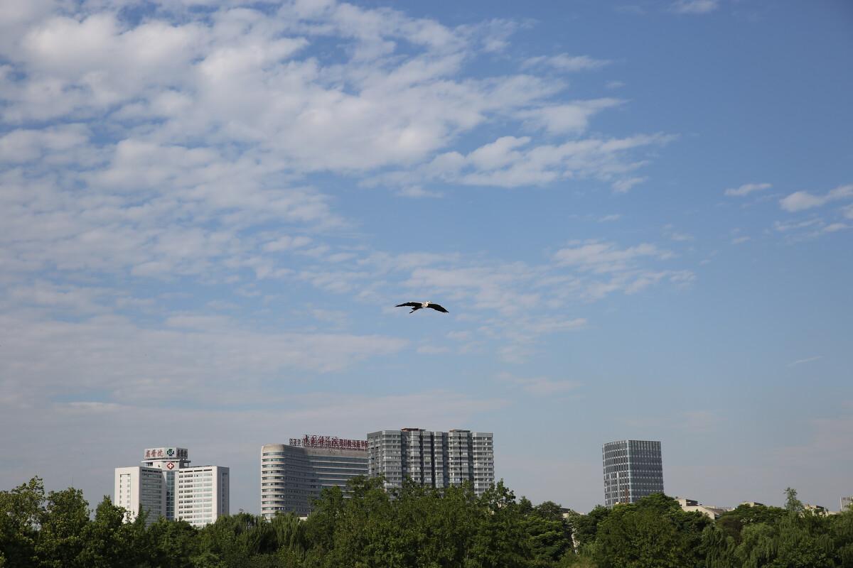 和老人们交流 了解到要拍飞行中的鸟 好的照片是侧面45度角 鸟飞行姿态优美的。